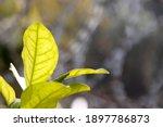 Vibrant Orange Tree Leaves With ...