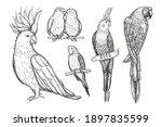 Set Of Sketch Tropical Parrots...