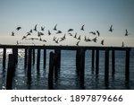 A Flock Of Seashore Birds Flyng ...