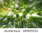 Bamboo Grove  Bamboo Forest At...