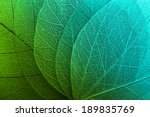 macro leaves background texture | Shutterstock . vector #189835769