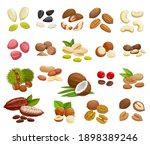 nuts  beans and seeds vector... | Shutterstock .eps vector #1898389246