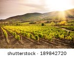 Landscape With Green Vineyards...