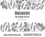 beer ingredients vector... | Shutterstock .eps vector #1898559823