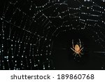 Spider On A Net Ful Of...