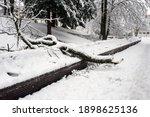 View Of Fallen Tree On Wooden...