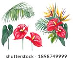 set of red flamingo flowers and ... | Shutterstock . vector #1898749999