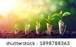 dollar seedling   growth... | Shutterstock . vector #1898788363