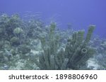 Beautiful Coral reef in the tropical waters of the Caribbean. Brain Coral Elkhorn corals