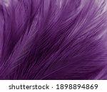 Beautiful abstract purple...