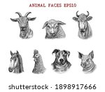 animal faces hand draw... | Shutterstock .eps vector #1898917666