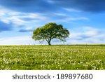 Alone Old Oak Tree On Dandelio...