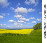 Beautiful Canola Field And The...