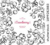 cranberries sketch frame vector ...   Shutterstock .eps vector #1899282883