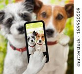 Stock photo couple of dog taking a selfie together with a smartphone 189930509