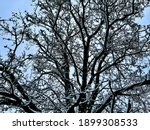 Dark Colored Branches Of A...