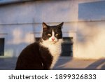 cute and sweet black cat on the ... | Shutterstock . vector #1899326833