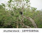 Cormorant  Yala National Park ...