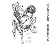 clover red sketch vector....   Shutterstock .eps vector #1899648406