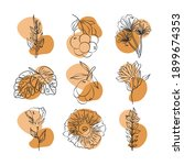 flowers leaves foliage fruits...   Shutterstock .eps vector #1899674353