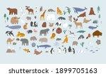 animals world for kids. poster... | Shutterstock .eps vector #1899705163