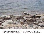 Cormorants On A Wild Beach