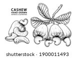 set of cashew fruit hand drawn... | Shutterstock .eps vector #1900011493