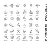 Condiment And Herbs Icons Set....