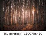 A Sunlit Forest On A December...