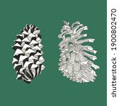 Hand Drawn Two Pine Cones. Ink...