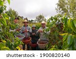 Group Of Happy Farmer Showing...