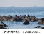 Cormorant Is On The Rocks