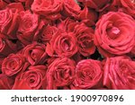 Rose  Make Your Valentine Day...