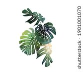 bouquet with tropical monsteras ... | Shutterstock . vector #1901001070