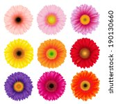 Big Colorful Gerbers Flowers...