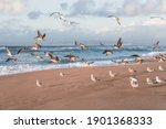 Beach At Sunset And Flock Of...