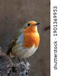 Portrait Of Robin On Log In...