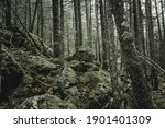 Mossy Rock In The Forest At...