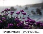 Purple Flowers Overlooking The...