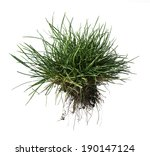 White Isolated Turf Grass And...