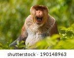 Stock photo proboscis monkey 190148963