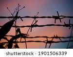 Silhouette Photo Of Barbed Wire ...