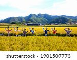 Scarecrows In The Golden Fields ...