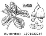 set of cashew fruit hand drawn... | Shutterstock .eps vector #1901633269