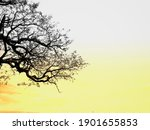 spreading branches in the... | Shutterstock . vector #1901655853