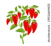 Bell Pepper Vegetable Plant....