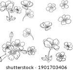 branch of cherry blossom on...   Shutterstock .eps vector #1901703406