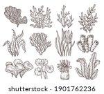 sketch seaweed. isolated ocean... | Shutterstock .eps vector #1901762236