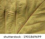 Brown Autumn Leaf Texture  ...
