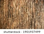 Bark Pattern Is Seamless...